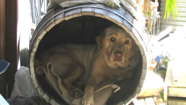 dog sitting in barrel